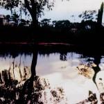 Amazon mirror water