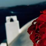 Santorini Pelargonie