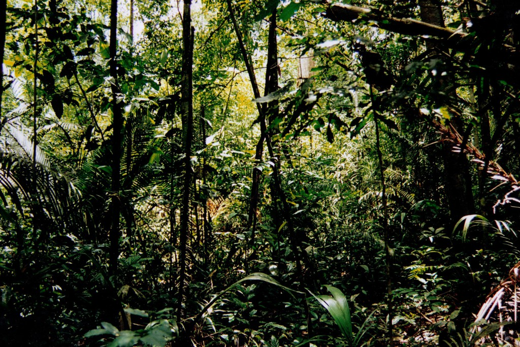 alcn jungle