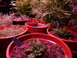 Pot trials