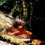 water body with red algae