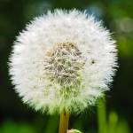 nature-grass-blossom2